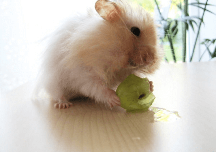 white grapes guinea pigs can eat