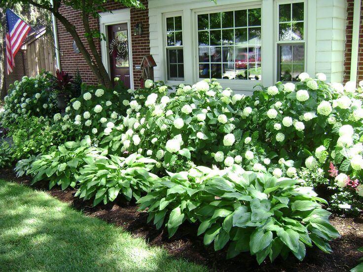 Front Yard Landscaping Ideas Lush Hydrangeas and Hostas - Cabritonyc.com