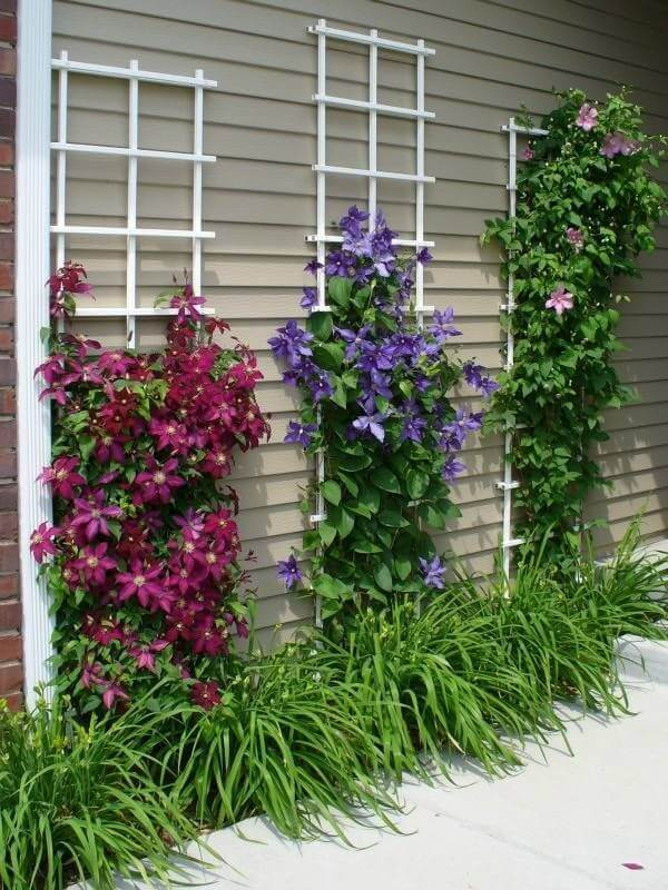 Front Yard Landscaping Ideas: Clematis Climbing Wall - Cabritonyc.com