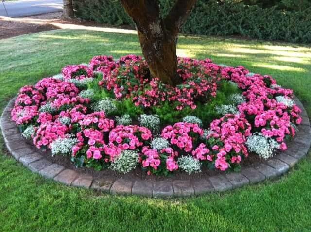 3 Circular Shade-Loving Annuals Flower Bed