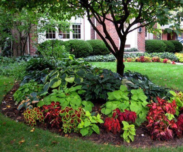 """Front Yard Landscaping Ideas - Coleus as well as Hosta """"Blossom"""" Beds - Cabritonyc.com"""