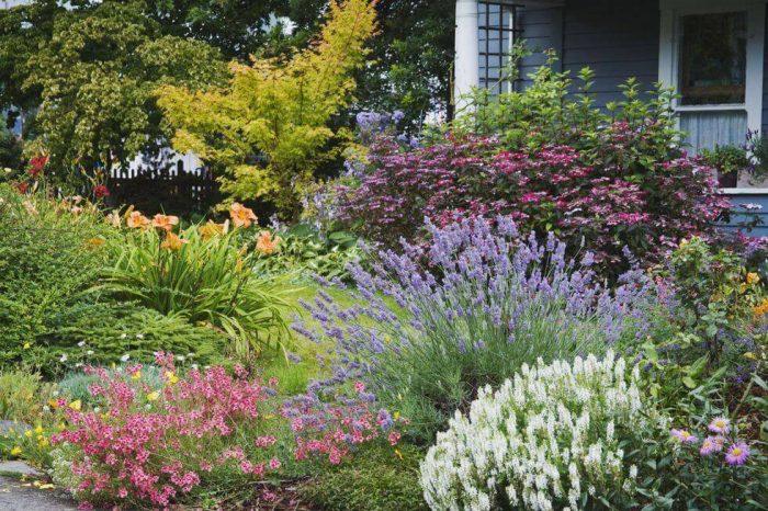 Backyard Landscaping Ideas - Plant Lavender - Cabritonyc.com