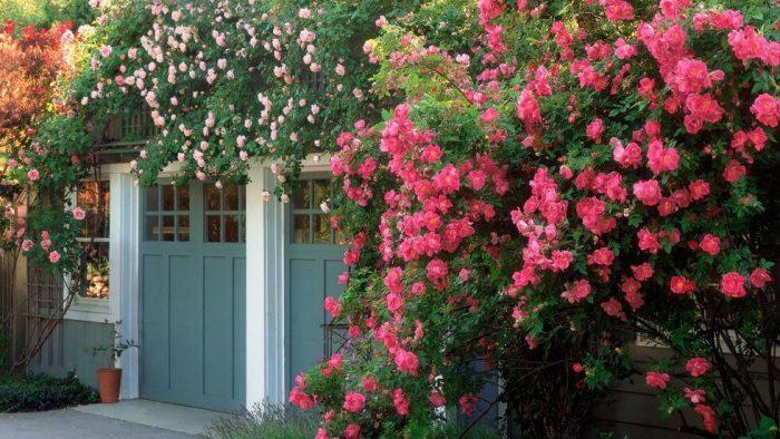 Backyard Landscaping Ideas - Rosy Outlook - Cabritonyc.com